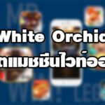 White Orchid สล็อตแมชชีนไวท์ออร์คิด