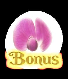 PeasFairy Bonus